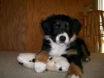Winsten Puppy