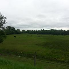Around Belle Plaine MN Teien (16)