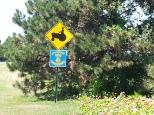 Beware of Tractors Crossing in my town