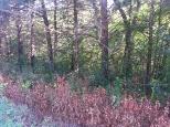 Around Belle Plaine MN Teien (64)