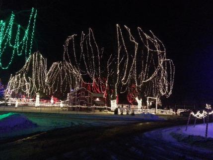 Christmas Holiday Lights - Teien (4)