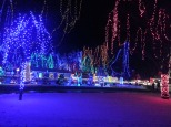 Christmas Holiday Lights - Teien (8)