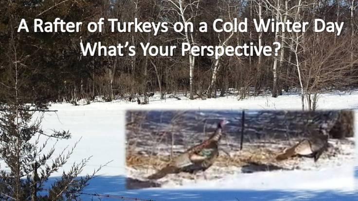 A Matter of Perspective - Cold Turkey - ChrisTeien.com